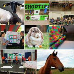 Collage of 4-H project photos, including a bay-colored horse, a white and tan rabbit, a shooting sports banner, a quilt, and an educational display.