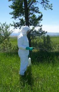 MSU Extension Pesticide Spraying