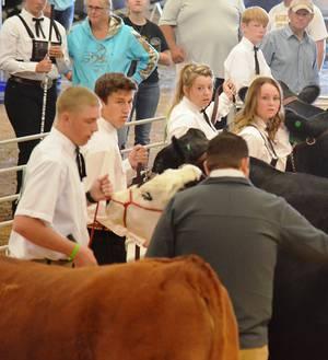 2018 Fair Beef Judging
